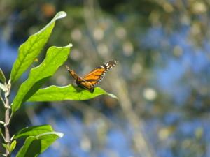 Conectividad en los habitats para la biodiversidad