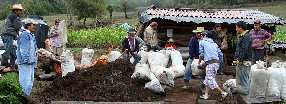 Regeneración de suelos con abonos orgánicos