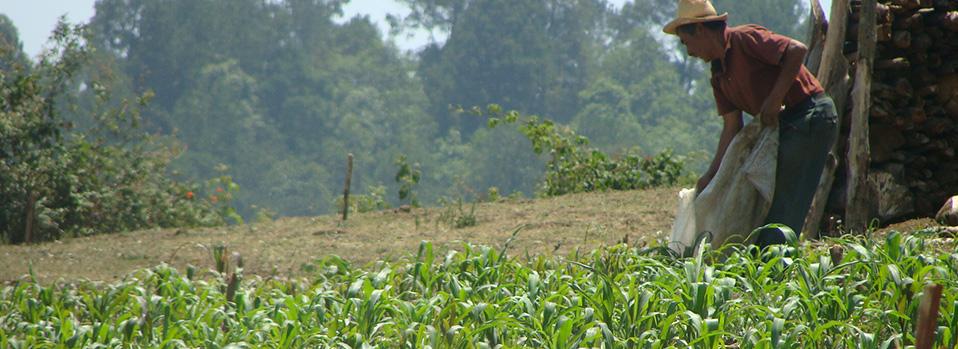 Agricultura campesina