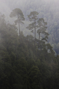 Bosques bajo manejo en Agua Bendita (Foto: Eugenio Fernández Vázquez)