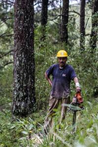 Trabajador en el aprovechamiento forestal, Amanalco. (Foto:Eugenio Fernández Vázquez)