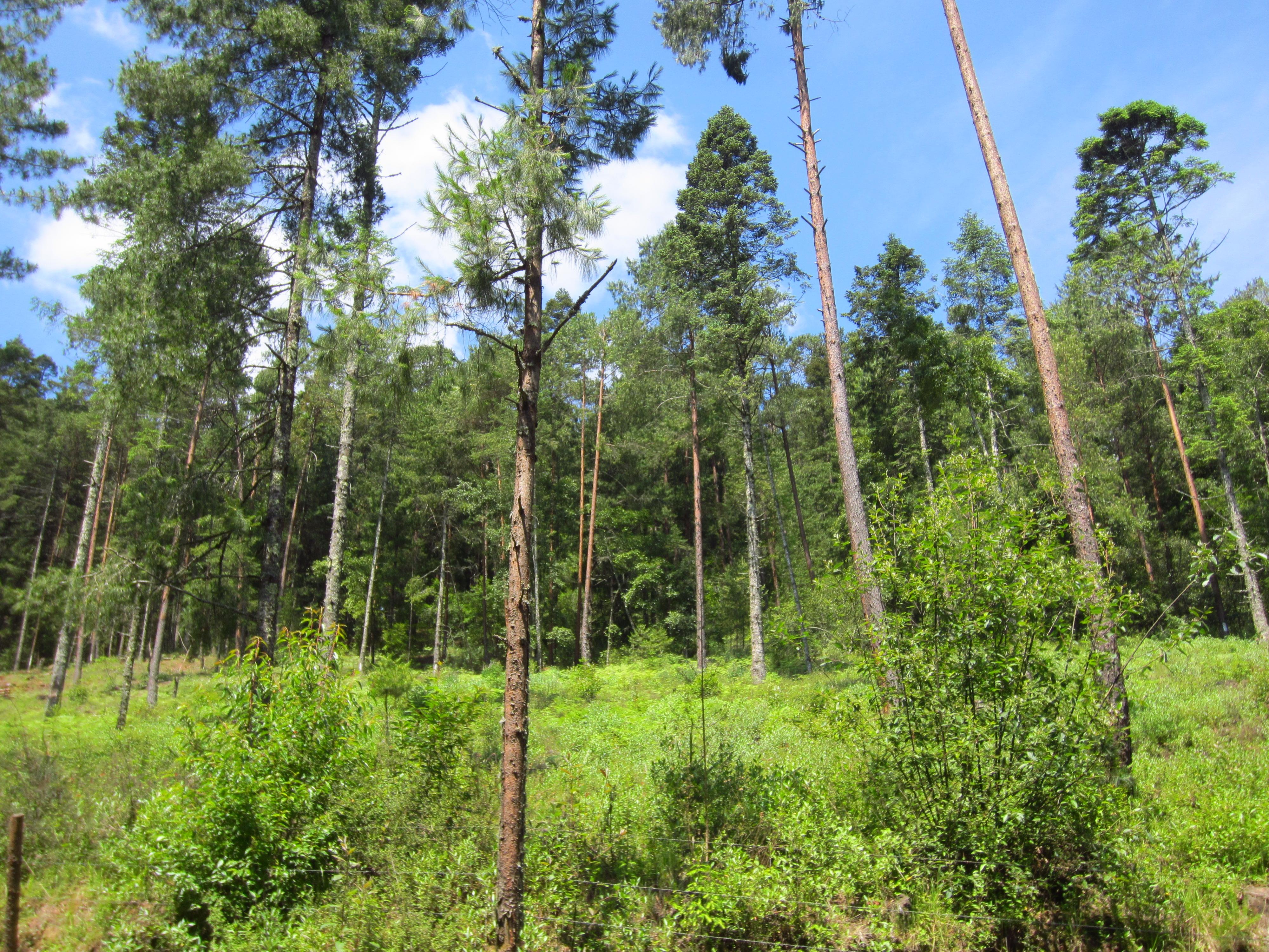 Programa de gesti n comunitaria del territorio conociendo for Manejo de viveros forestales